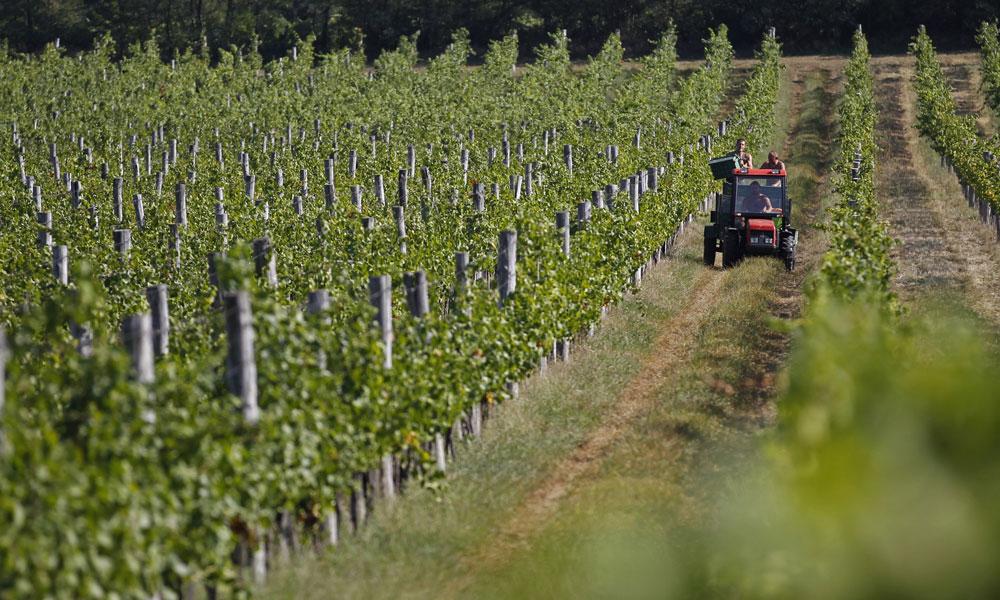 l_ania-agroalimentaire-2011-crise-economique-le-foll